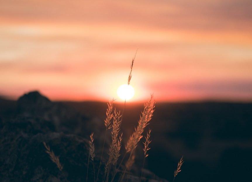 sunrise with plant